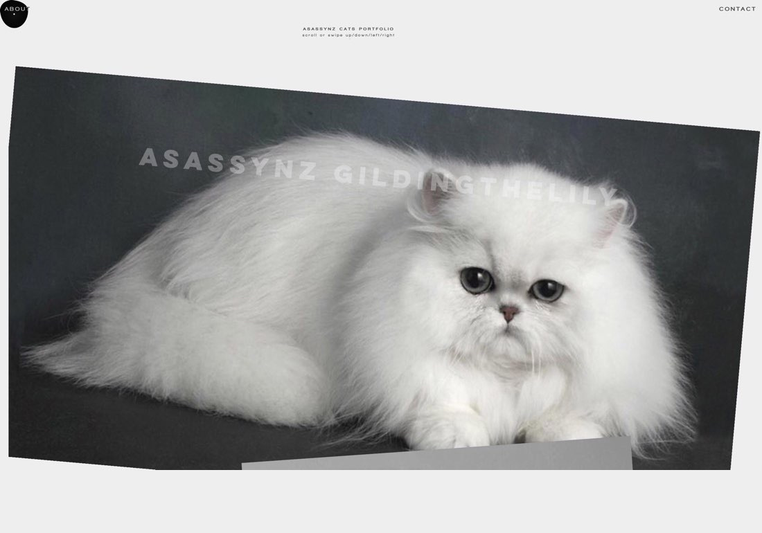 ASASSYNZ CATS
